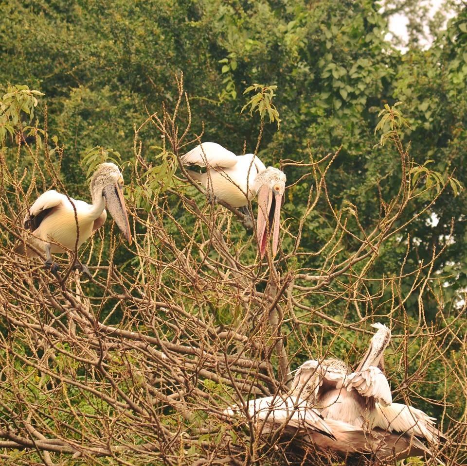 Rangathittu bird sanctuary