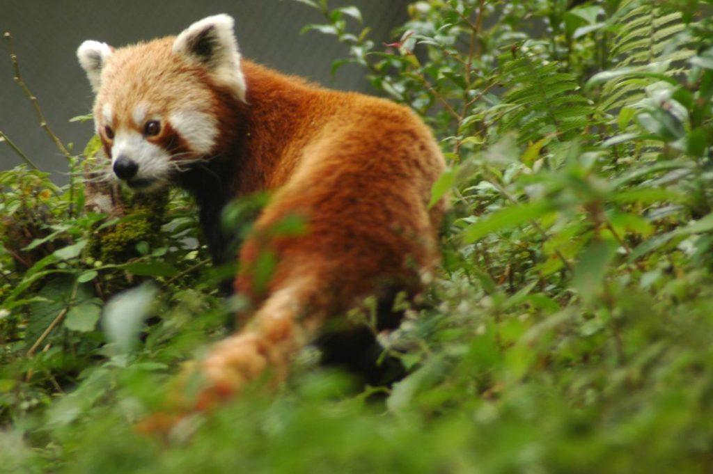 Gangtok Zoo